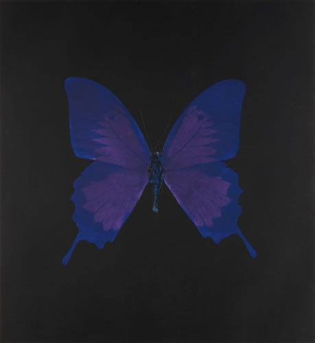 Damien Hirst, Violet Butterfly, 2008  | Article on ArtWizard